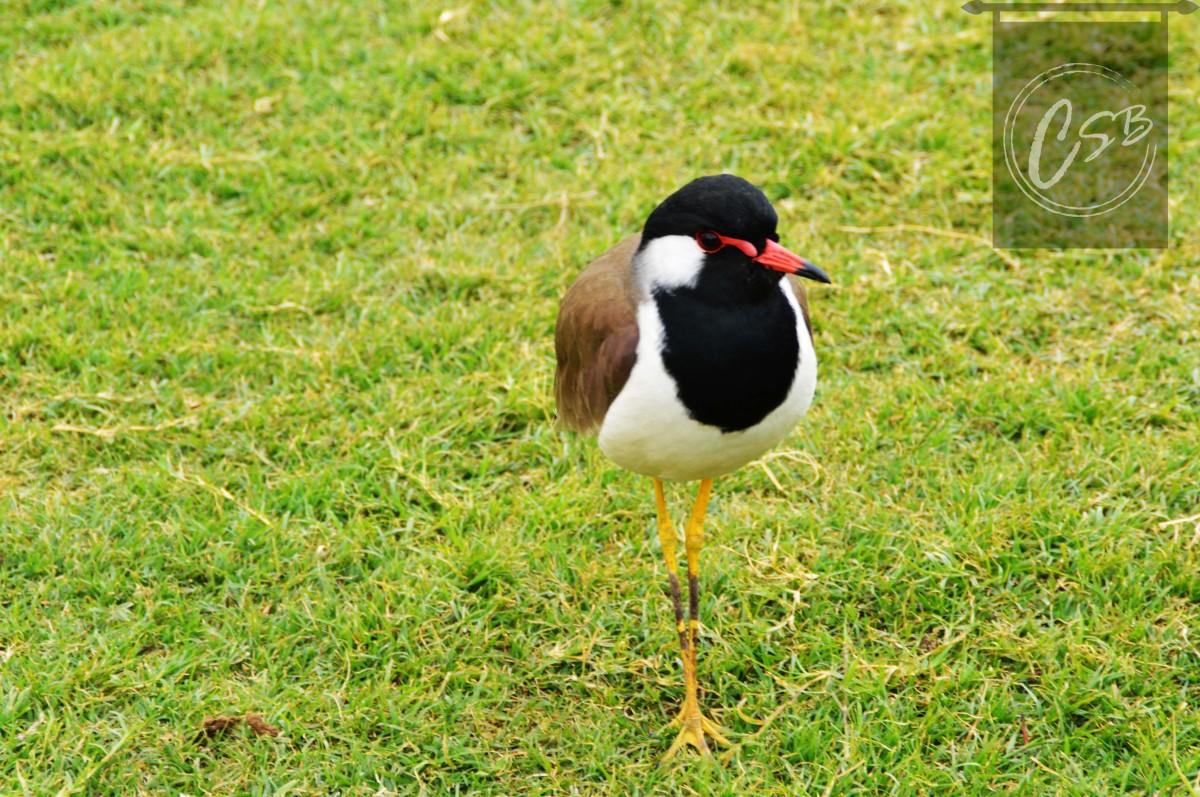 Exotic birds at Jantar Mantar