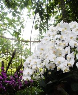 Orchid Garden, Botanic Garden