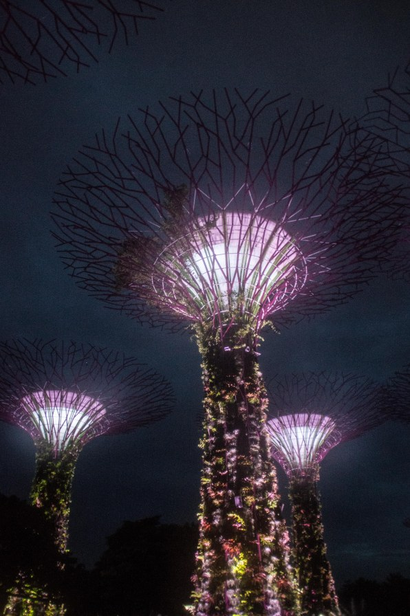 Light and Sound show at Super Tree Grove