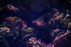 SEA Aquarium (1)