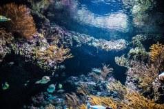 SEA Aquarium (2)