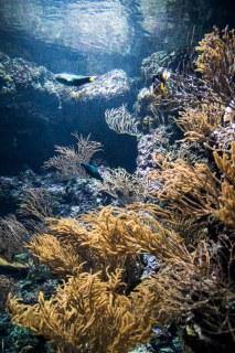 SEA Aquarium (3)